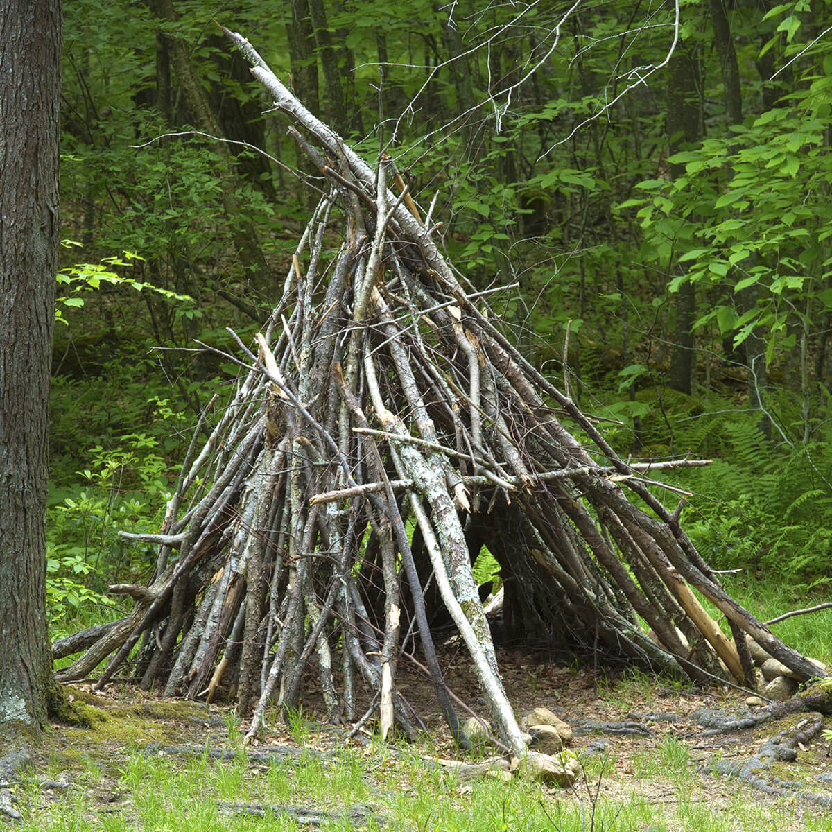Supplies You Need to Build Primitive Survival Shelter